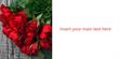 2x1m Outdoor Valentine Roses